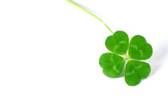 four-leaf-clover-3942207